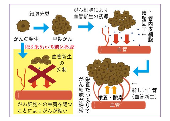 米ぬか 多糖 体 RBS米ぬか多糖体|がん免疫療法に取り入れたい成分